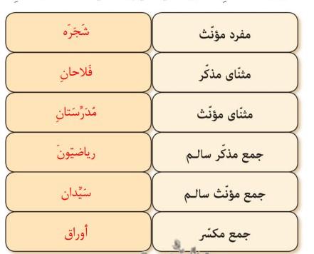 جواب صفحه 14 عربی نهم