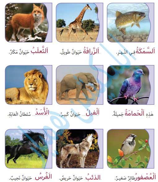 زیر هر تصویر نام آن را به عربی بنویسید. «دو کلمه اضافه است.»