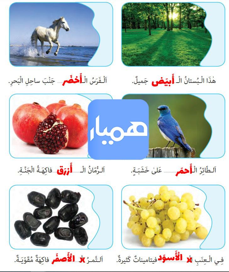 جواب صفحه 97 عربی نهم